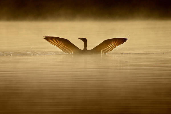 Cormorant Wall Art - Photograph - Symmetry by Rob Blair