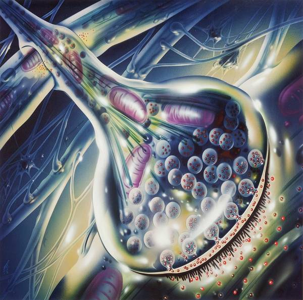 Neuron Wall Art - Photograph - Synapse In Epilepsy by John Bavosi/science Photo Library