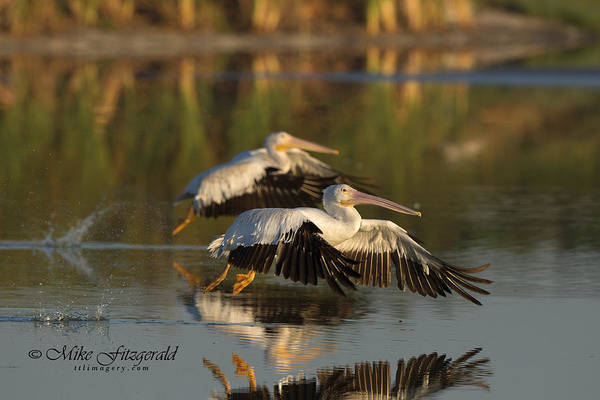Photograph - Synchronized Take Off by Mike Fitzgerald