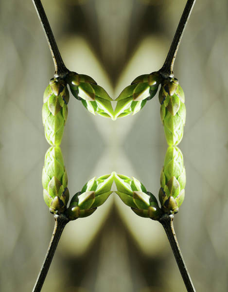Vertical Abstract Photograph - Syringa Buds by Silvia Otte