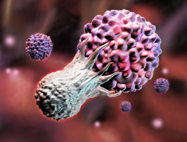 Photograph - T-cell Fighting Off Cancer, Illustration by Spencer Sutton