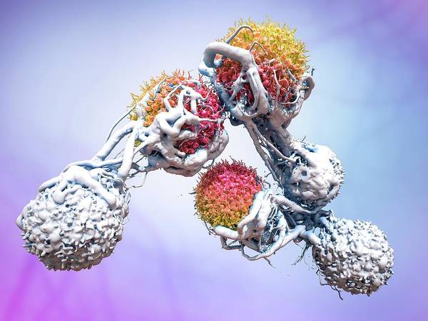 Three Dimensional Wall Art - Photograph - T Cells Attacking Cancer Cells by Maurizio De Angelis