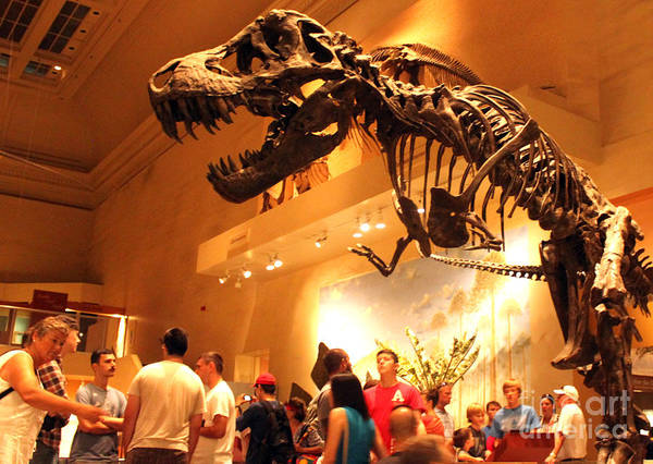 Photograph - T-rex Attack At The Smithsonian by Gregory Dyer