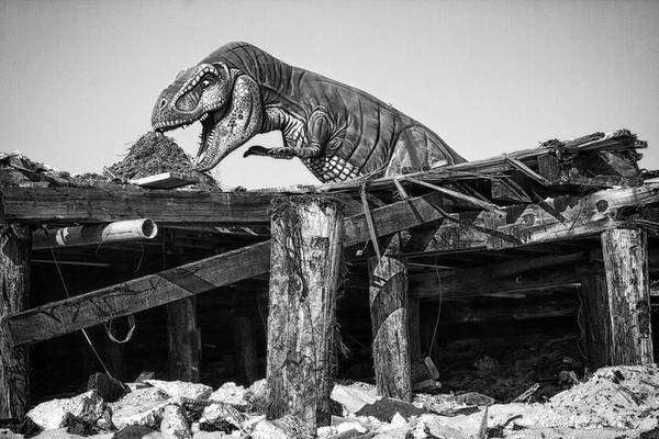 Photograph - T-rex by Dawn J Benko