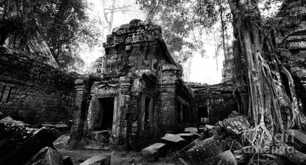 Photograph - Ta Prohm At Dawn by Julian Cook