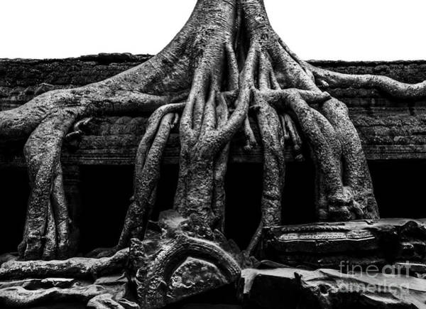 Angkor Wall Art - Photograph - Ta Prohm Ruin by Julian Cook