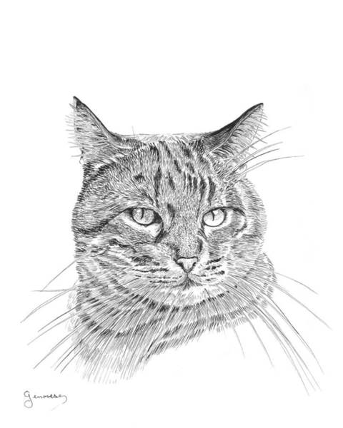 Drawing - Tabby by Carl Genovese