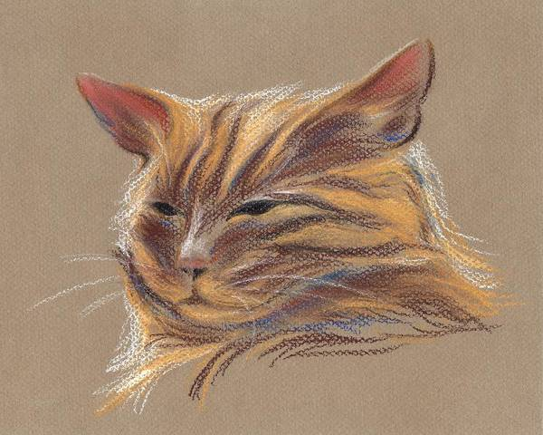 Pastel - Tabby Cat Portrait In Pastels by MM Anderson