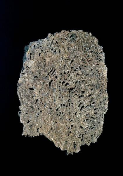 Chain Link Photograph - Tabulate Coral Fossil by Natural History Museum, London/science Photo Library