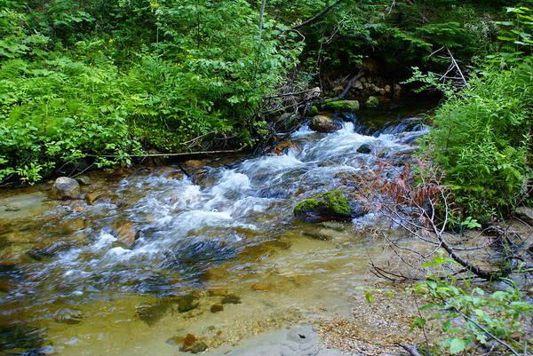 Photograph - Tacoma Creek 2 by Ben Upham III
