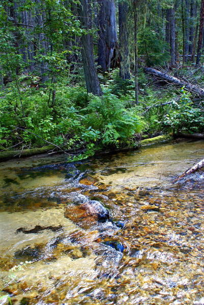 Photograph - Tacoma Creek 3 by Ben Upham III