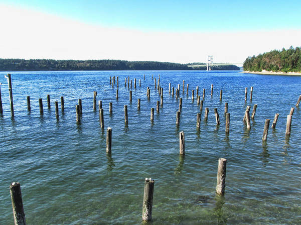 Photograph - Tacoma Narrows Bridge 5 by Ron Roberts