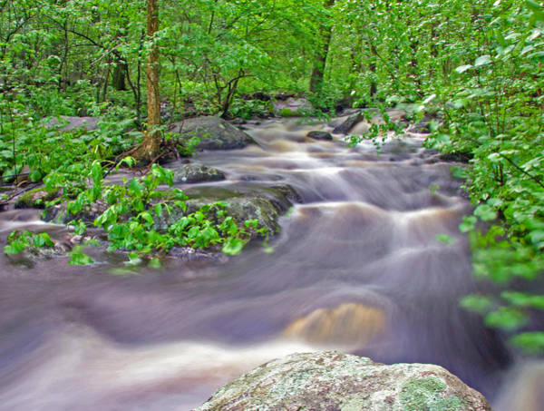 Photograph - Tadmuck Brook by Frank Winters