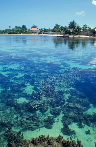 Polynesian Photograph - Tahiti Papeete by Anonymous
