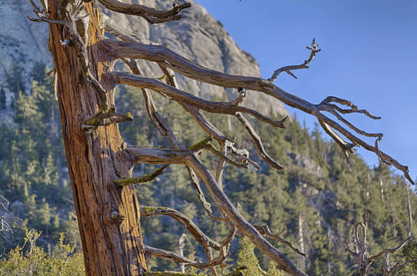 Photograph - Tahquitz And The Pine by Scott Campbell