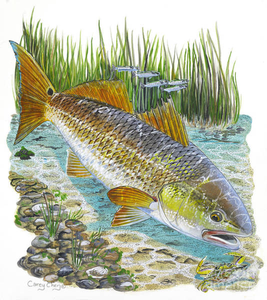 Redfish Wall Art - Painting - Tailing Red by Carey Chen