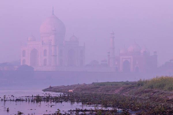 Dromedary Wall Art - Photograph - Taj Mahal In Morning Mist by Tom Norring
