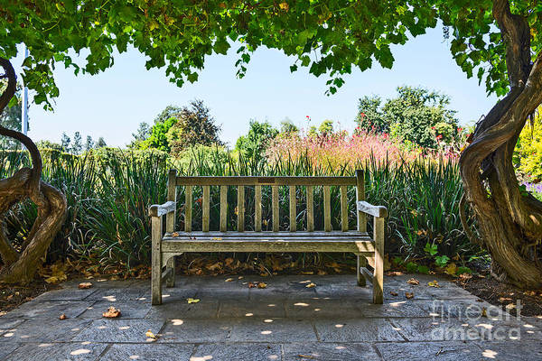 Gazebo Photograph - Take A Seat - Under A Pretty Gazebo Covered In Grape Vines And Leaves. by Jamie Pham