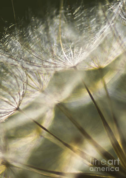 Seed Head Wall Art - Photograph - Take Me With You When You Go by Jan Bickerton