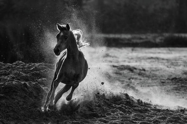 Strength Photograph - Take Off by Mohammed Alnaser