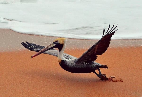 Flagler Beach Photograph - Take Off - Pelican by George Bostian