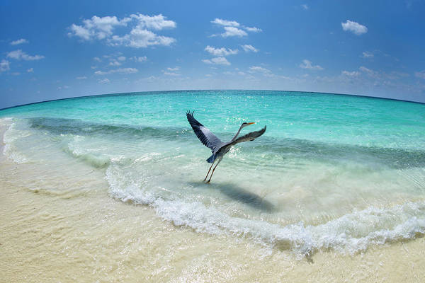 Paradise Photograph - Take-off by Roberto Marchegiani