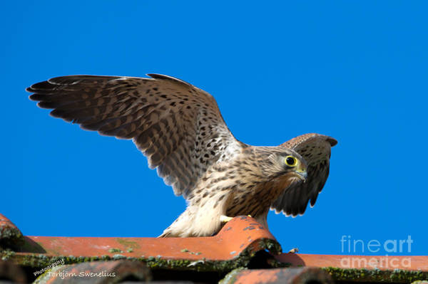 Photograph - Take Off by Torbjorn Swenelius