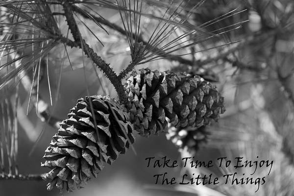 Little Things Photograph - Take Time To Enjoy The Little Things by Kathy Clark