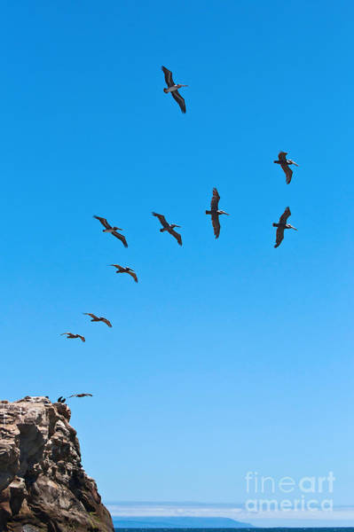Wall Art - Photograph - Taking Flight by Jamie Pham