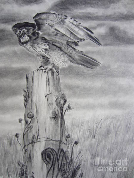 Grey Skies Drawing - Taking Flight by Laurianna Taylor