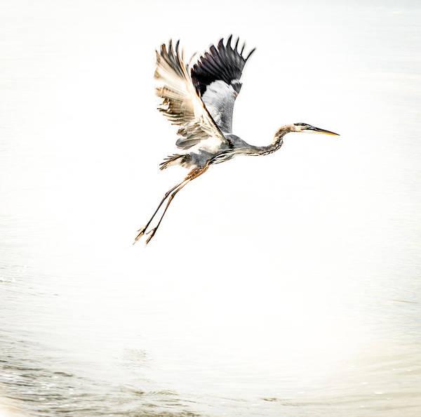 Boca Grande Photograph - Taking Flight by Patricia Christakos