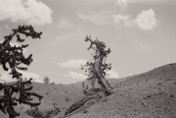 Talking Trees In Bryce Canyon Art Print
