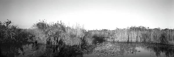 Anhinga Photograph - Tall Grass At The Lakeside, Anhinga by Panoramic Images