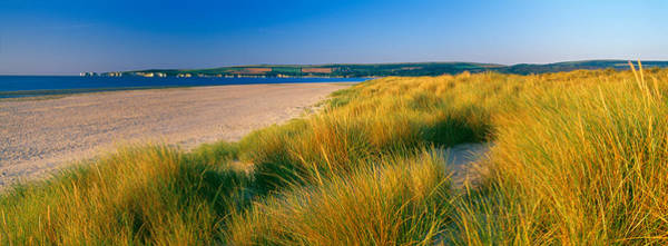 Studland Photograph - Tall Grass On The Beach, Studland, Isle by Panoramic Images