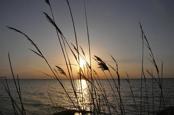 Inlet Photograph - Tall Grass Sunset by Bill Cannon