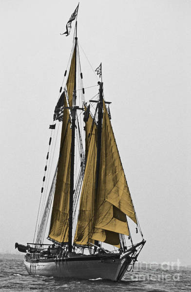 Sailing Terms Photograph - Tall Ship Under Sail by Skip Willits