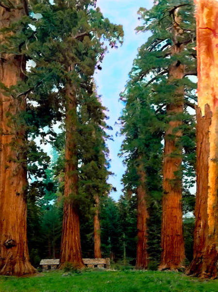 Photograph - Tall Trees In Yosemite National Park by Bob and Nadine Johnston