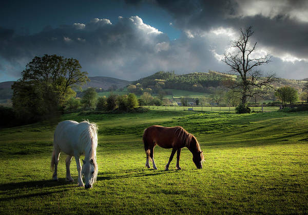 Photograph - Talybont Ponies by Land And Light