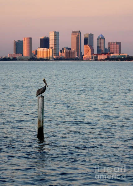 Photograph - Tampa Skyline And Pelican by Carol Groenen