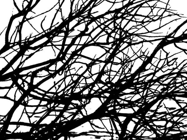 Photograph - Tangle by Grace Dillon