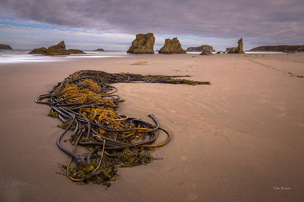 Wall Art - Photograph - Tangled.... Bandon Oregon by Tim Bryan