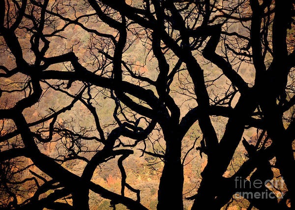 Photograph - Tangled Up In Fall by Kari Yearous