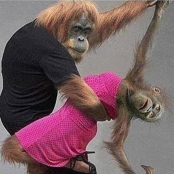 Wall Art - Photograph - Tango #tango #monkey #dance by Marina Boitmane