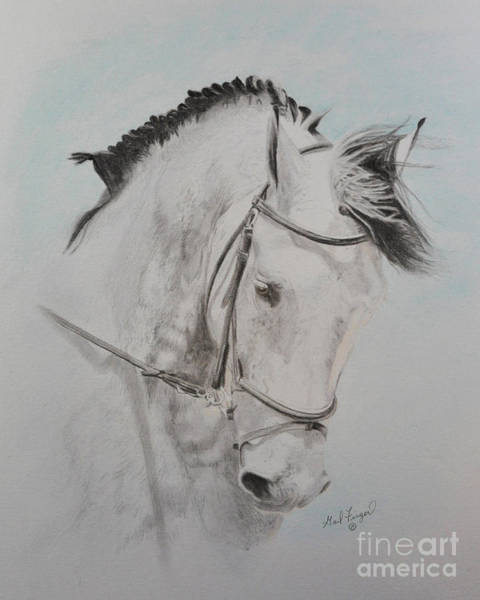 Friesian Drawing - Tanion by Gail Finger