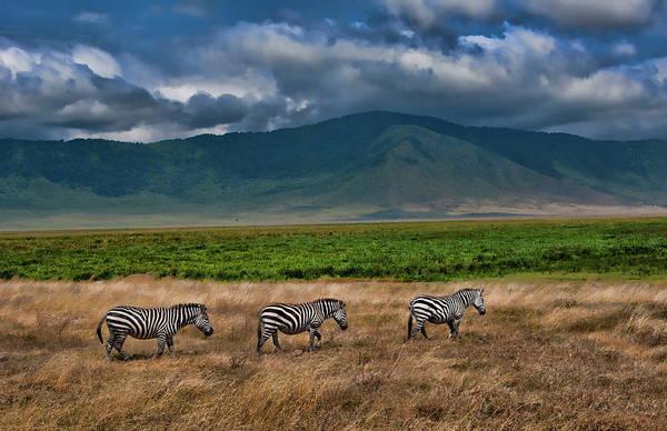 Wall Art - Photograph - Tanzania, Ngorongoro Conservation Area by Bill Bachmann