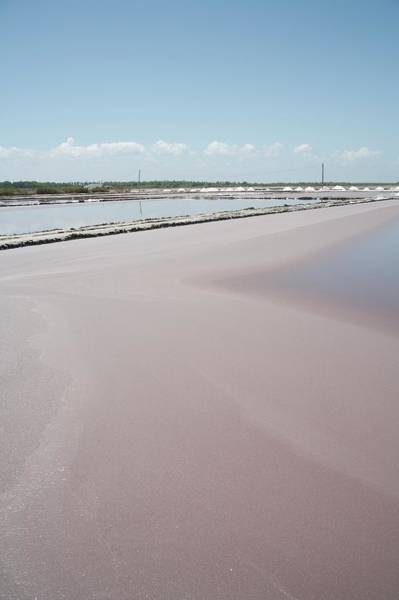 Sodium Chloride Wall Art - Photograph - Tanzania Salt Pans by Andy Crump/science Photo Library
