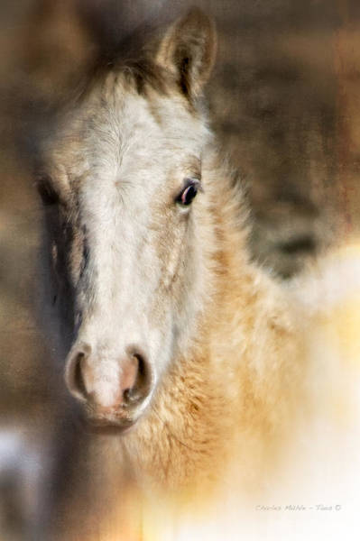Photograph - Taos Pony X by Charles Muhle