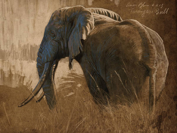 Wall Art - Digital Art - Tarangire Bull by Aaron Blaise