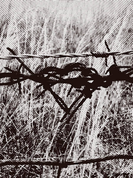 Photograph - Target - Barbed Wire Love Series by Lesa Fine