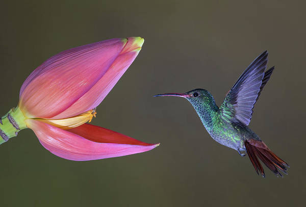Hummingbird Wings Photograph - Target Practice by Greg Barsh